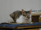 Cats of Neco Republic, #0703