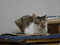 Cats of Neco Republic, #0704