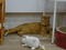 Cats of Neco Republic, #0709