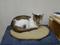 Cats of Neco Republic, #0723