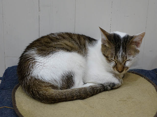 Cats of Neco Republic, #0724