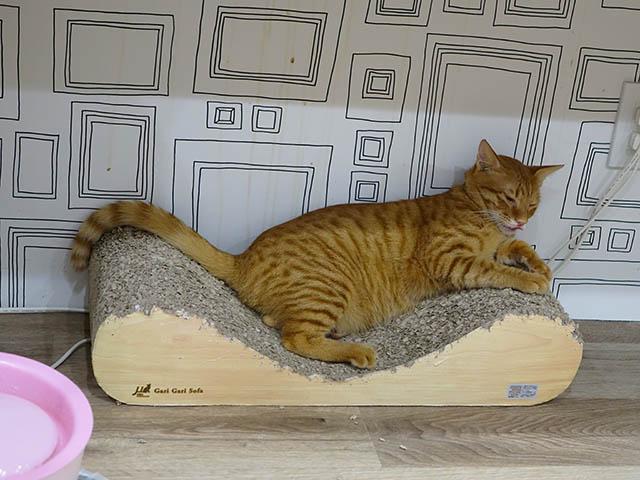 Cats of Neco Republic, #0726