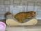 Cats of Neco Republic, #0728