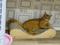 Cats of Neco Republic, #0729