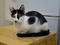 Cats of Neco Republic, #0730
