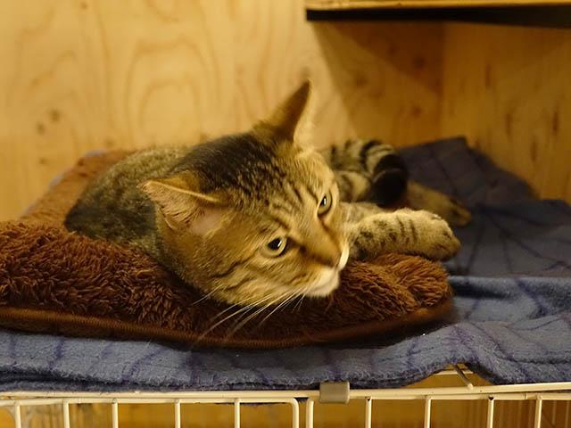 Cats of Neco Republic, #0733