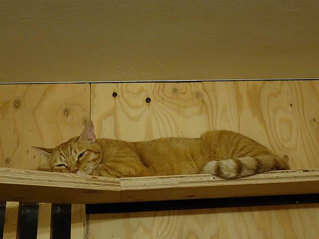 Cats of Neco Republic, #0735
