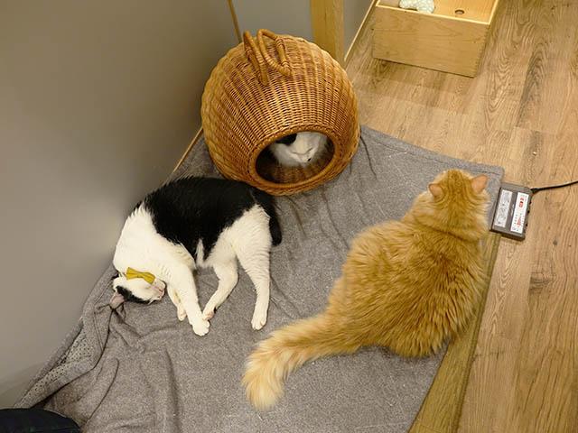 Cats of Neco Republic, #0744