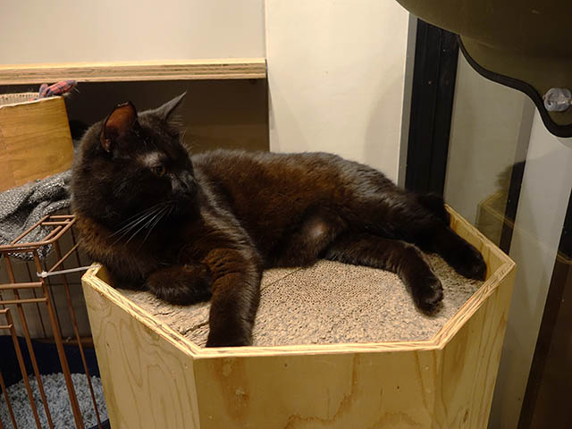 Cats of Neco Republic, #0757
