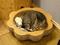 Cats of Neco Republic, #0762