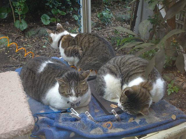 Yuki, Koyuki & Hoshi, #0976