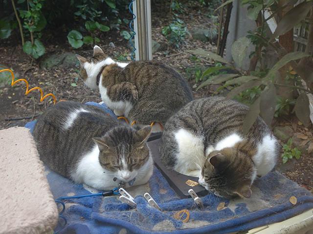 Yuki, Koyuki & Hoshi, #0977