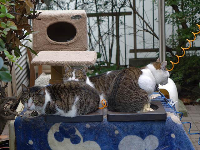 Yuki, Koyuki & Hoshi, #0978