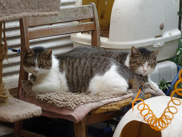 Yuki & Koyuki, #0985