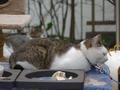 Yuki, Koyuki & Hoshi, #0995