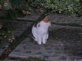Local Cat, #1767