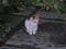 Local Cat, #1768