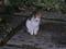 Local Cat, #1769