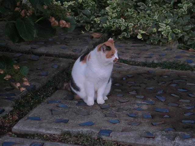 Local Cat, #1770
