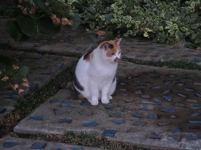 Local Cat, #1771