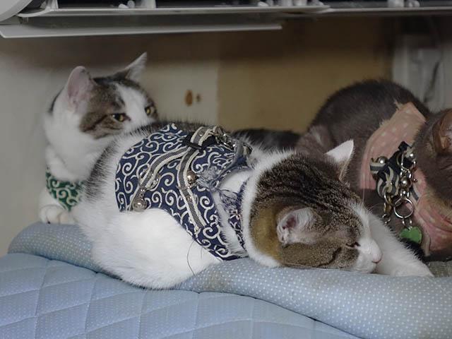 Margherita, Umi & Koumi, #1053