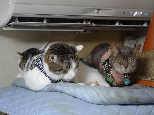 Margherita, Umi & Koumi, #1056
