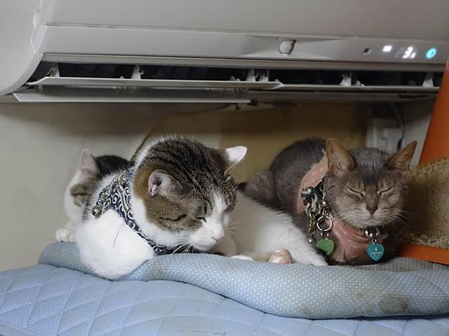 Margherita, Umi & Koumi, #1057