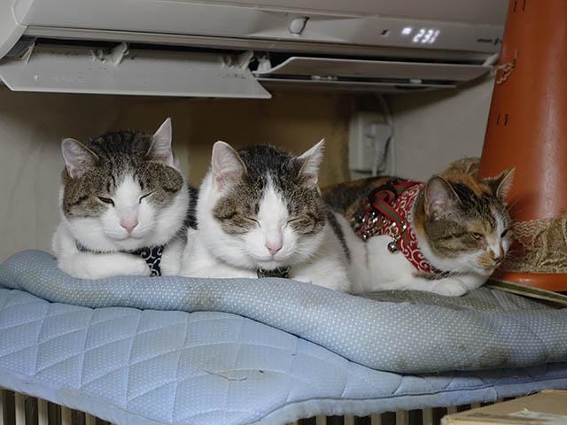 Umi, Hana & Koumi, #1058
