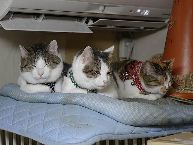 Umi, Hana & Koumi, #1060