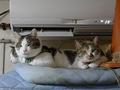 Umi, Hana & Koumi, #1061