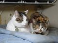 Umi & Hana, #1079