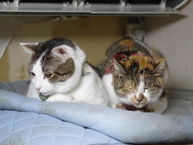 Umi & Hana, #1081