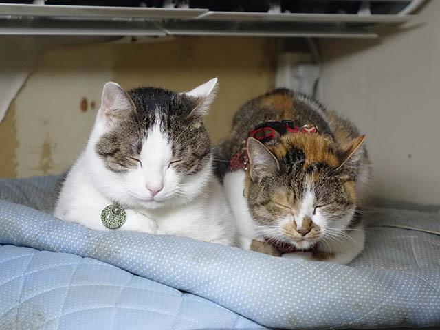 Umi & Hana, #1082