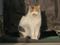 Local Cat, #1925 (Closeup)