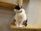 Cats of Neco Republic, #1208