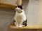 Cats of Neco Republic, #1209
