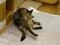 Cats of Neco Republic, #1210