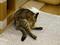 Cats of Neco Republic, #1211