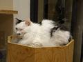 Cats of Neco Republic, #1212