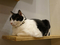Cats of Neco Republic, #1213