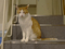 Cats of Neco Republic, #1237