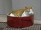 Cats of Neco Republic, #1243