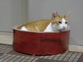 Cats of Neco Republic, #1254