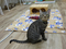 Cats of Neco Republic, #1280