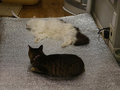 Cats of Neco Republic, #1312