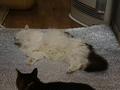 Cats of Neco Republic, #1314