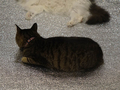 Cats of Neco Republic, #1315