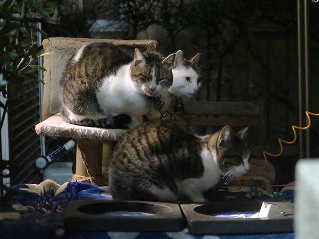 Yuki, Koyuki & Hoshi, #2037