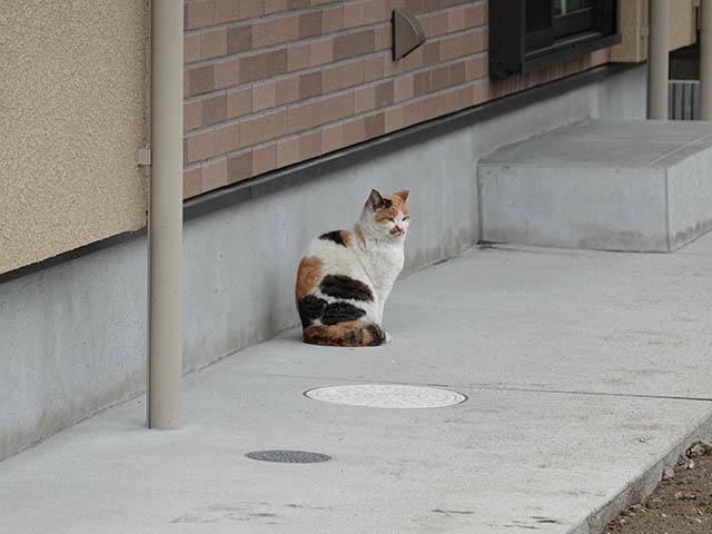 Local Cat, #0001