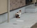 Local Cat, #0002